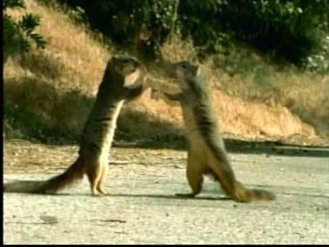 GEICO Squirrels, Dogs and Lizard - YouTube