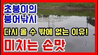 초짜붕어조사의 세종 조천천 붕어낚시, 토종붕어, 대뺏길뻔