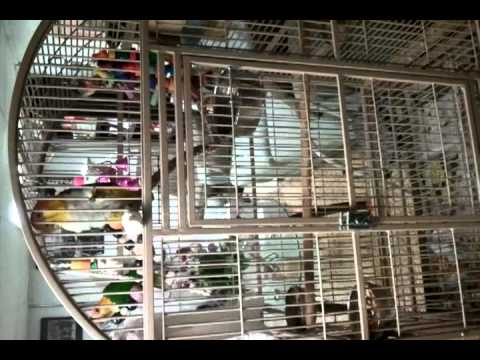 All my parrots…..