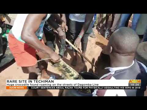 Huge crocodile found roaming on the streets of Dagomba line – Adom TV News (21-9-21)