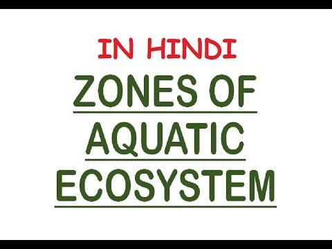 Aquatic Ecosystem Zones - Photic/Aphotic, Limnetic, Pelagic, Intertidal, Neritic (In Hindi)