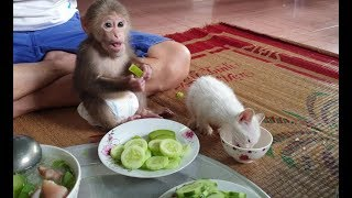 Baby Monkey | Doo And Cat Miu Have Lunch With Family