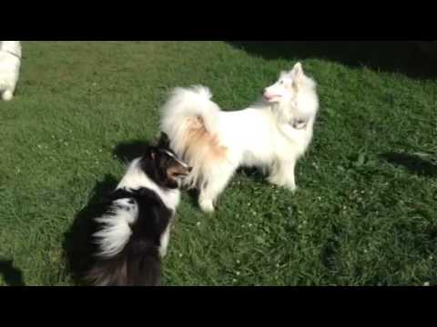Eggs the blind and deaf dog playing