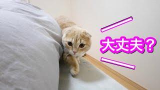 風邪をひいた妹のお見舞いをする猫が可愛すぎた
