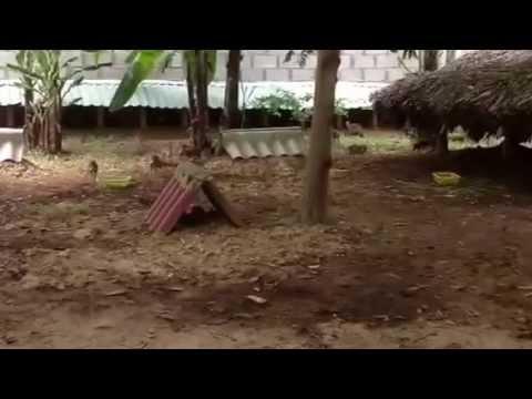 Mô hình nuôi Cheo cheo giống ở Trang trại Động vật hoang dã Thanh Long