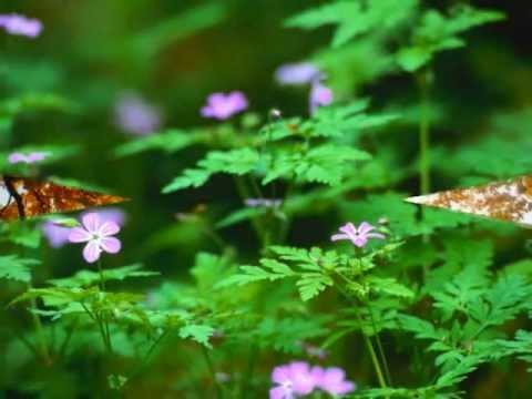 En Güzel Doğa Resimleri- The Beautiful Nature Photo