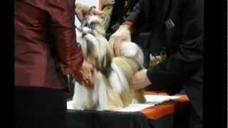 Purina National Dog Show 2012