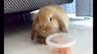 Cute Bunny Tricks