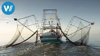 Louisiana - Land unter bei den Shrimpfischern (360° - GEO Reportage)