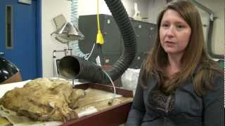 To Know a Scientist - Meredith Rivin, Vertebrate Paleontologist