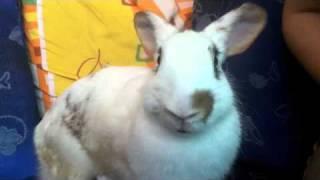 Repeat youtube video breast feeding baby rabbits