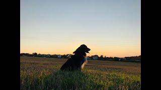 15 dog tricks//Buddy