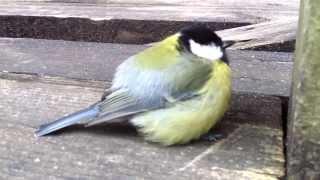 птица спит(, 2013-10-01T16:55:43.000Z)