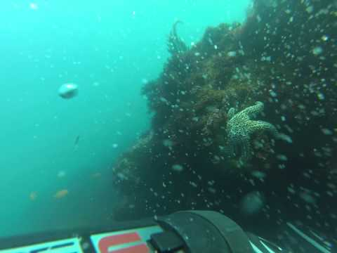 scuba-dive-orange-county-huge-sea-lion-bull-comes-right-up-to-me-(starts-at-4:00)