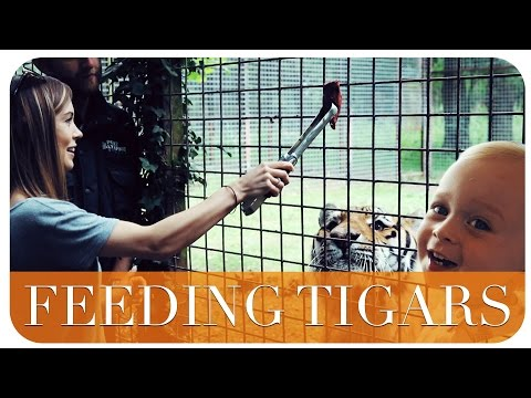 FEEDING TIGERS | THE MICHALAKS