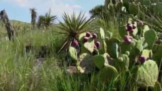 Chihuahuan Desert: A walk Through the Desert