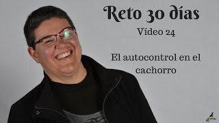 #Reto30días Vídeo 24 | El autocontrol en los cachorros thumbnail