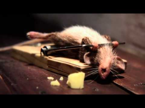 O Rato e o Queijo (HD)