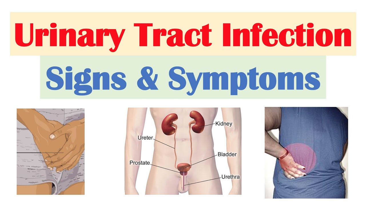 Download Urinary Tract Infection (UTI) Signs & Symptoms (& Why They Occur)