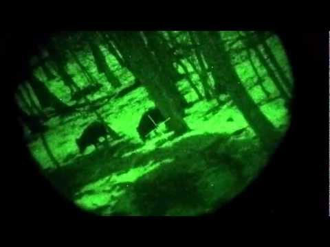 Night vision hunting - Dedal 480