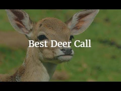 Best Deer Call 2018