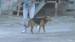 Объектив 15 08 18 В Николаеве подсчитали бродячих собак