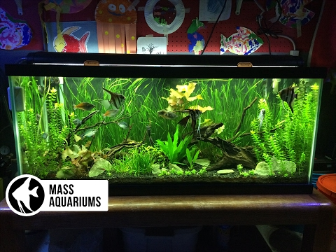 How to set up a FRESHWATER AQUARIUM: Beginners guide to your 1st Fish Tank