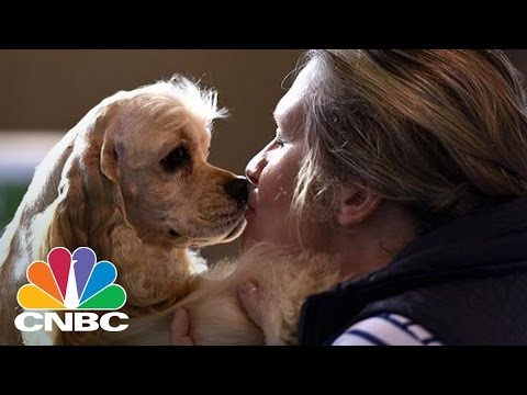Dogs Understand Human Speech Better Than Previously Thought | CNBC