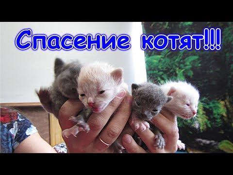 видео: Спасаем котят. Морковка их бросила! (04.19г.) Семья Бровченко.