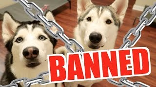 I Was Banned From The Husky Training Community On Facebook...