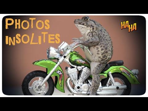 45 photos drôles et insolites - YouTube