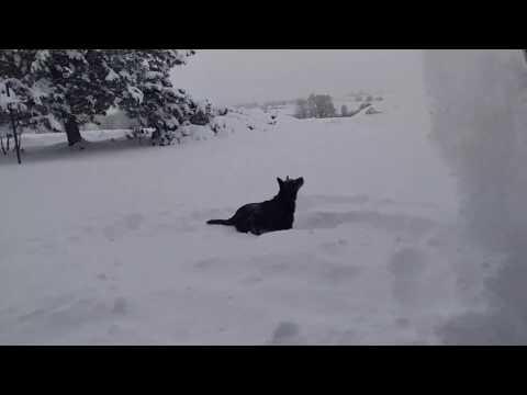 Daisy Dog - Catching Snow