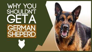 GERMAN SHEPHERD! 5 Reasons You SHOULD NOT GET a German Shepherd Puppy!
