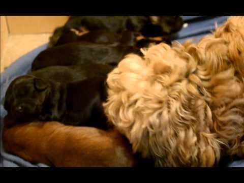 Vidéo Chiots 2011  Nom D'un Chien!!!