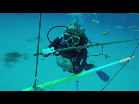 Coral Restoration Intership