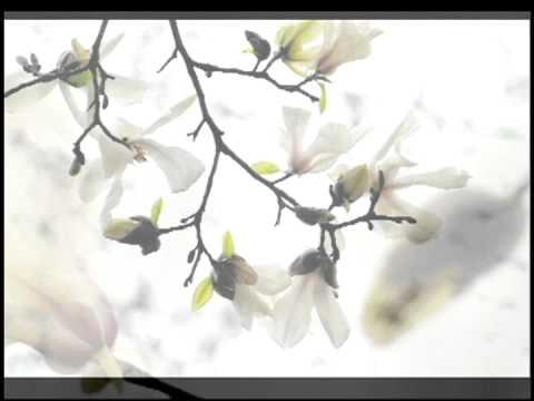 サクラのアルバムと中山晋平の「カチューシャの唄」