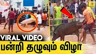 ஜல்லிக்கட்டு போல் பன்றியை அடக்கி Mass காட்டிய வீரர்கள் | Latest Tamil News