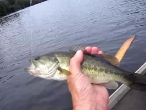 Mianus river bass fishing greenwich ct daiwa reel youtube for Bass fishing in ct