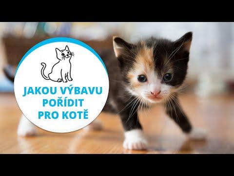 VÁŠ CHOVATEL RADÍ..jakou výbavu pořídit pro kotě from YouTube · Duration:  1 minutes 28 seconds