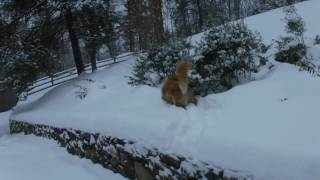 Honey Wolf Weather Update Bridgewater Connecticut February 12, 2017