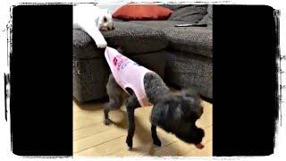 КОТЫ ПРОТИВ СОБАК приколы с животными | CATS vs DOGS fun with animals #547