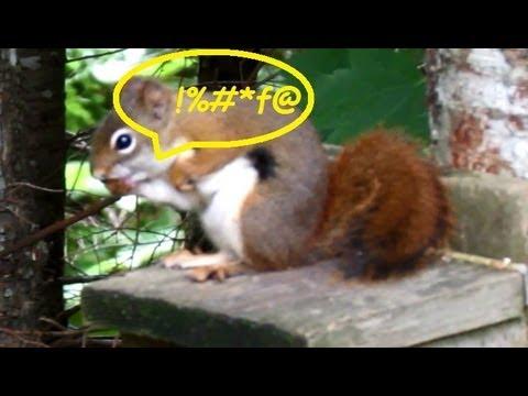 Red Squirrel Smashes Finger Loses Temper Uses Bad Language!