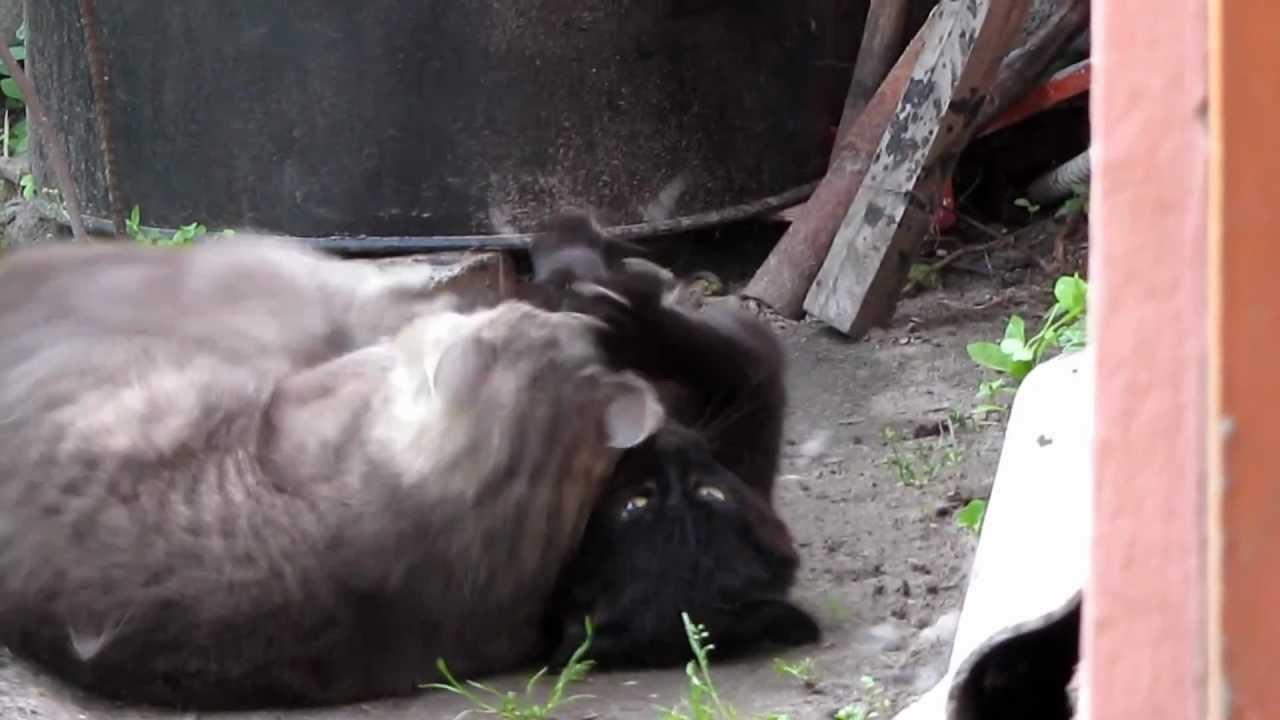 Видео собака убивает кота