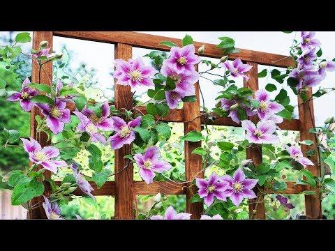Опора для клематиса - шпалера своими руками для вьющихся растений
