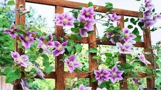 Смотреть видео Что такое шпалера: как сделать опору для садовых и огородных растений