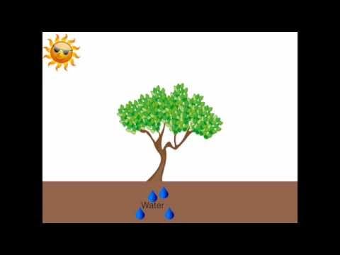 Super Uitleg Fotosynthese Klas 1 - YouTube PR-54