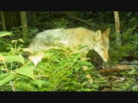 PA Auction - 30+ Acres Of Pristine Hunting In Centre County Pennsylvania