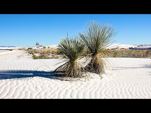 White Sands National Monument, New Mexico, USA in 4K Ultra HD