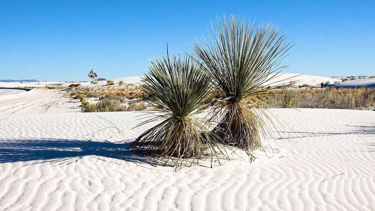 White Sands National Park, New Mexico, USA In 4K Ultra HD