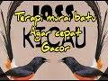 Masteran Murai Batu Ampuh Terapi Murai Cepat Bunyi Gacor  Mp3 - Mp4 Download